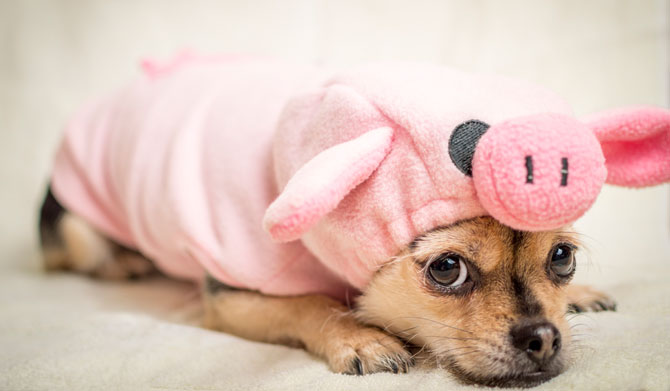 innerer Schweinehund überwinden