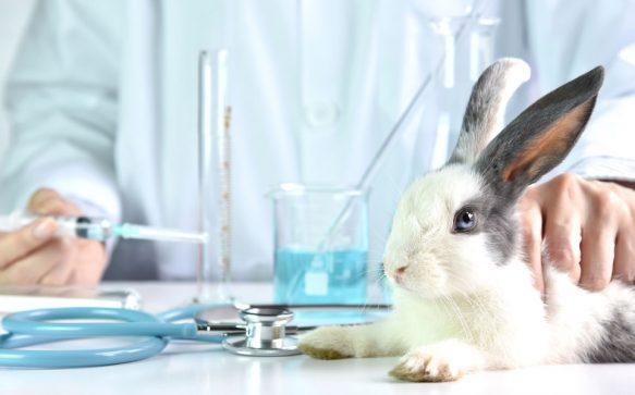 Diese Kosmetik-Firmen verzichten auf Tierversuche