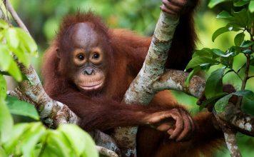 Wie Palmöl den Regenwald zerstört und was du dagegen tun kannst