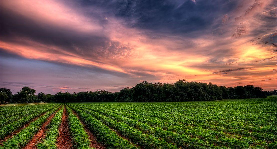 Umwelt-Irrtümer: Die 7 größten Öko-Mythen aufgedeckt