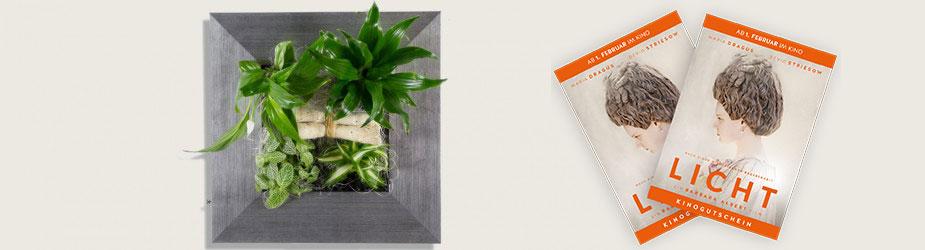 Flowerbox Licht Gewinnspiel