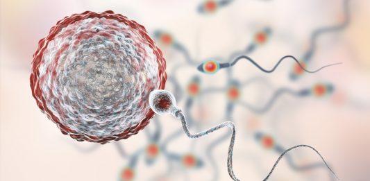 Wie lange kann Sperma überleben?