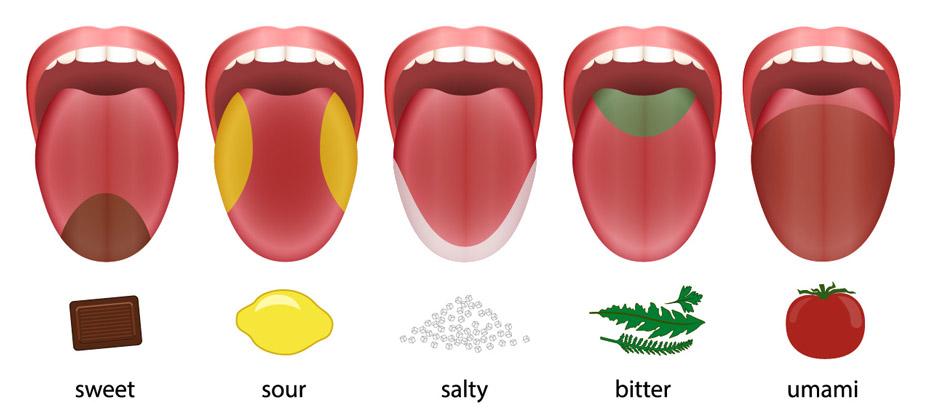 Zunge Geschmacksrichtungen