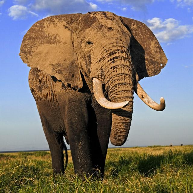WWF Patenschaft