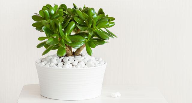 Diese 9 Zimmerpflanzen Sorgen Fur Eine Positive Energie Ajoure De