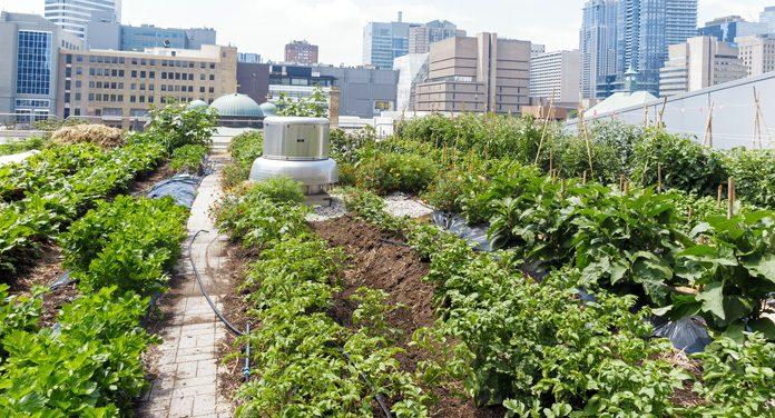 Urban Gardening: Beete erobern die Stadt zurück
