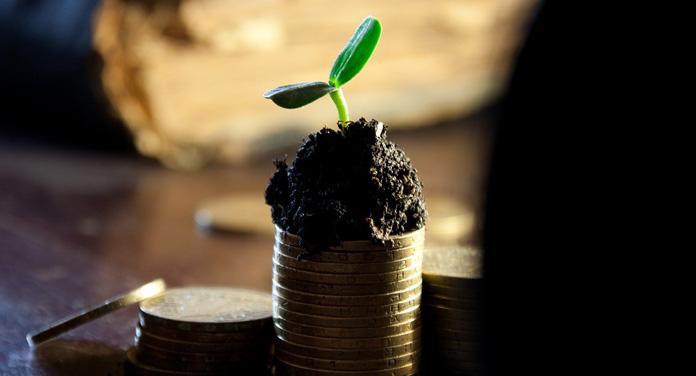 Kleine Pflanze auf einem Stapel aus Münzen