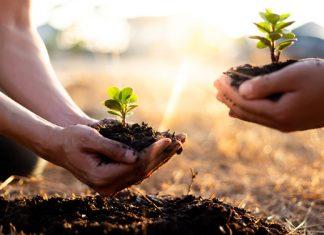 Bäume pflanzen mit jedem Klick: Empfehlenswerte Projekte fürs Klima