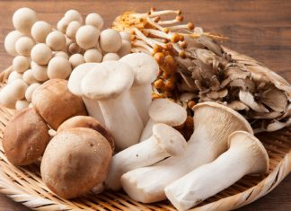 Pilze einfrieren, lagern und trocknen – diese Tipps solltest du beachten