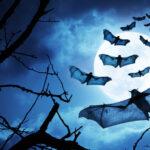 Vampire auf dem Vormarsch: Buffy bekommt ein Reboot!