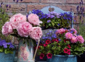Die besten Blumen, um dein Zuhause zu dekorieren