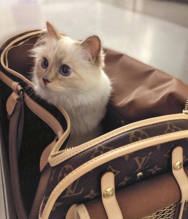 Katze Coupette Karl Lagerfeld