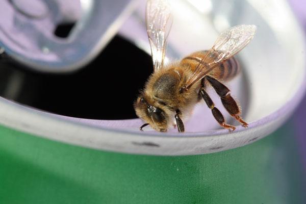 Cola als Insektenschutz